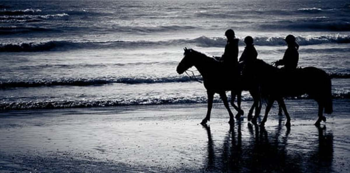 Horse Riding in Newquay - Ride a Horse on a Beach.