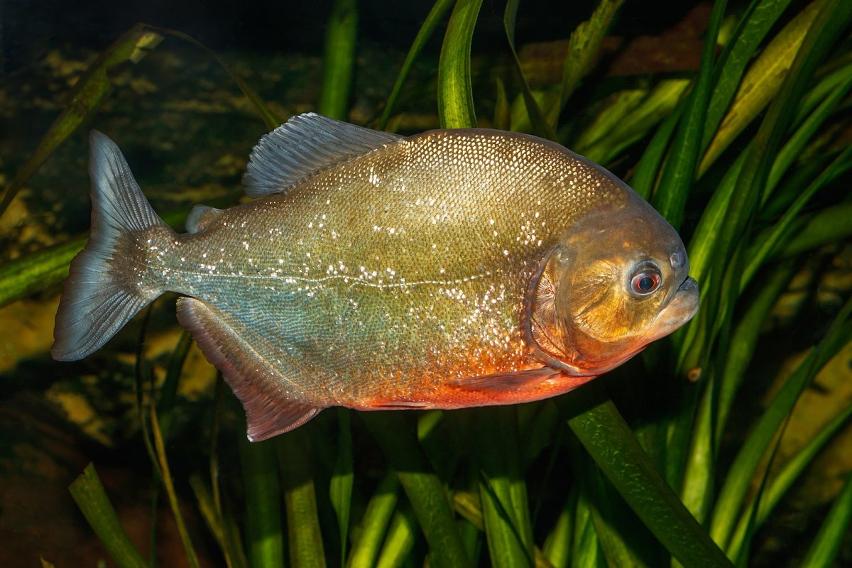 top-7-most-dangerous-fish-in-the-world