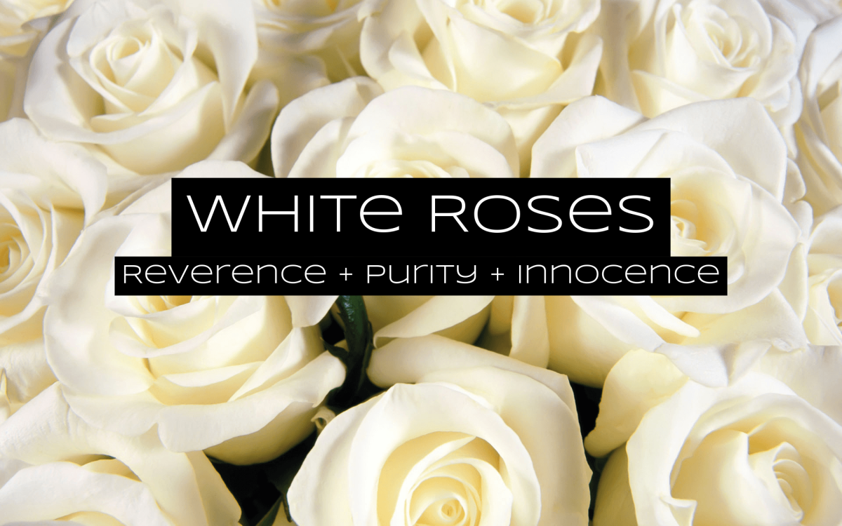 White roses are for reverence. The blooms are about innocence and purity. They're popular at weddings.
