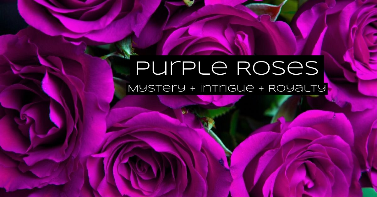 Purple roses are for royalty. Purple roses are mysterious, charming, and majestic.