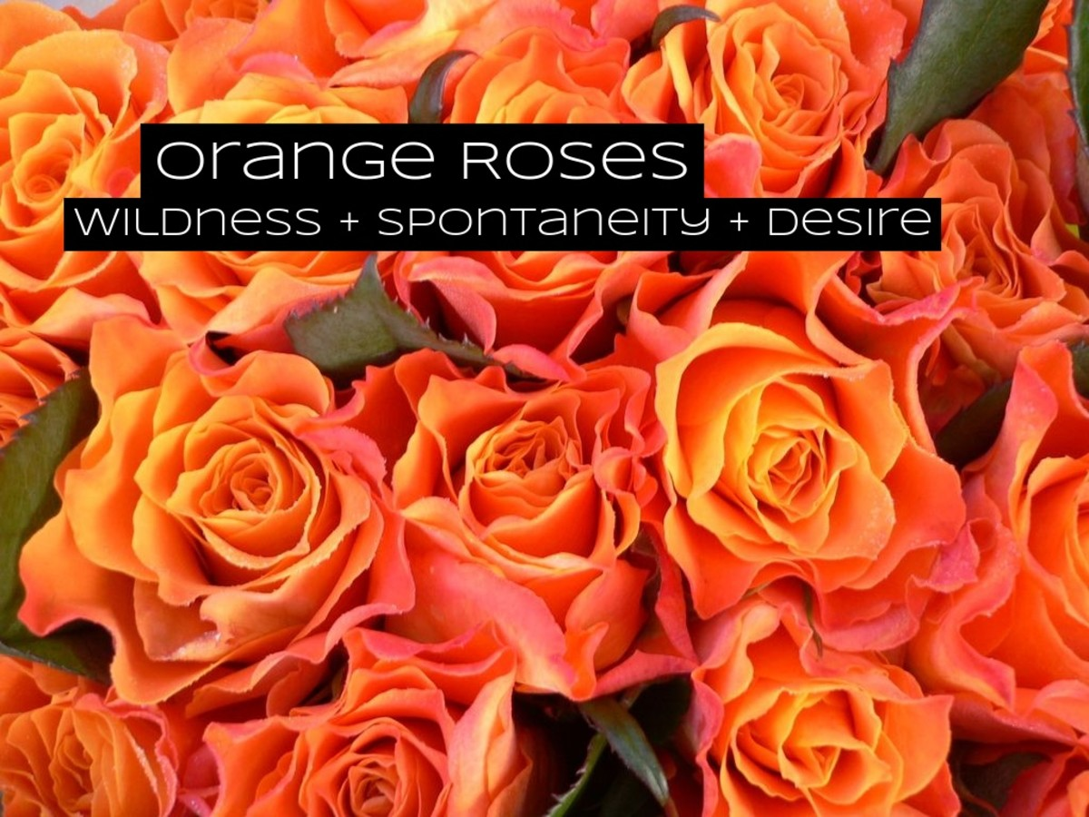 Orange roses are for wildness, excitement, and spontaneity. These are perfect flowers for your crush.