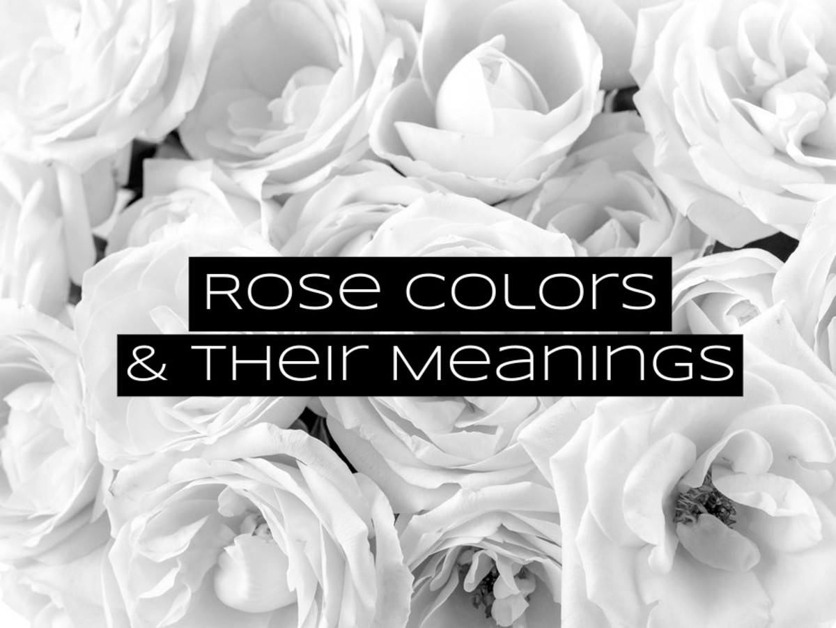 Roses are some of the most popular flowers to give. The color of the roses adds a message to the flower arrangement.