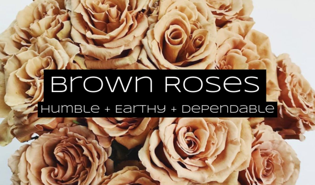 Brown roses are for dependability, humility, and class. Give these to the earthy friend among your group.