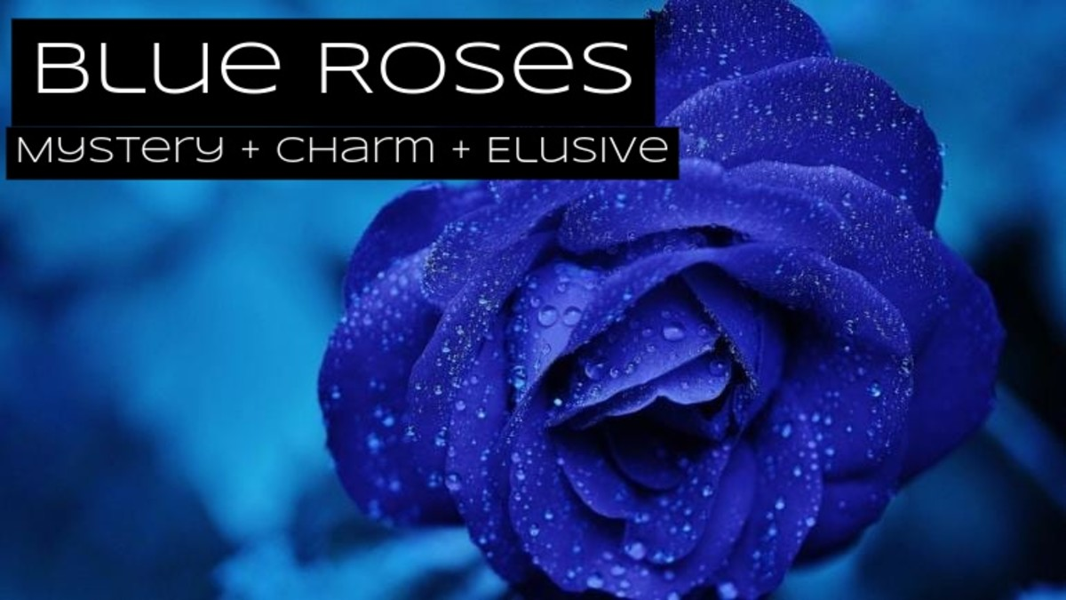 Blue roses are about mystery, intrigue, and fantasy. You want your message to be elusive and difficult to interpret.