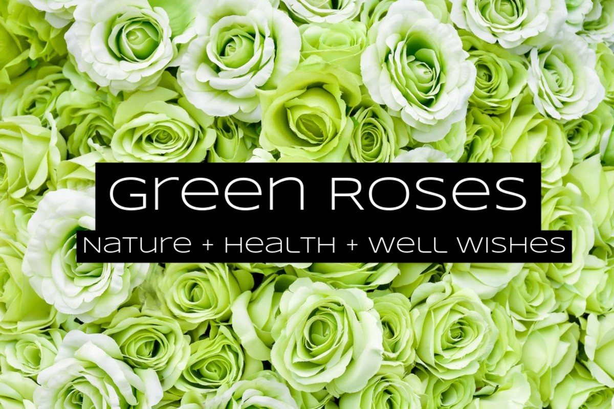 Green roses are for those who love nature. These are often sent to people who are recovering from sickness.