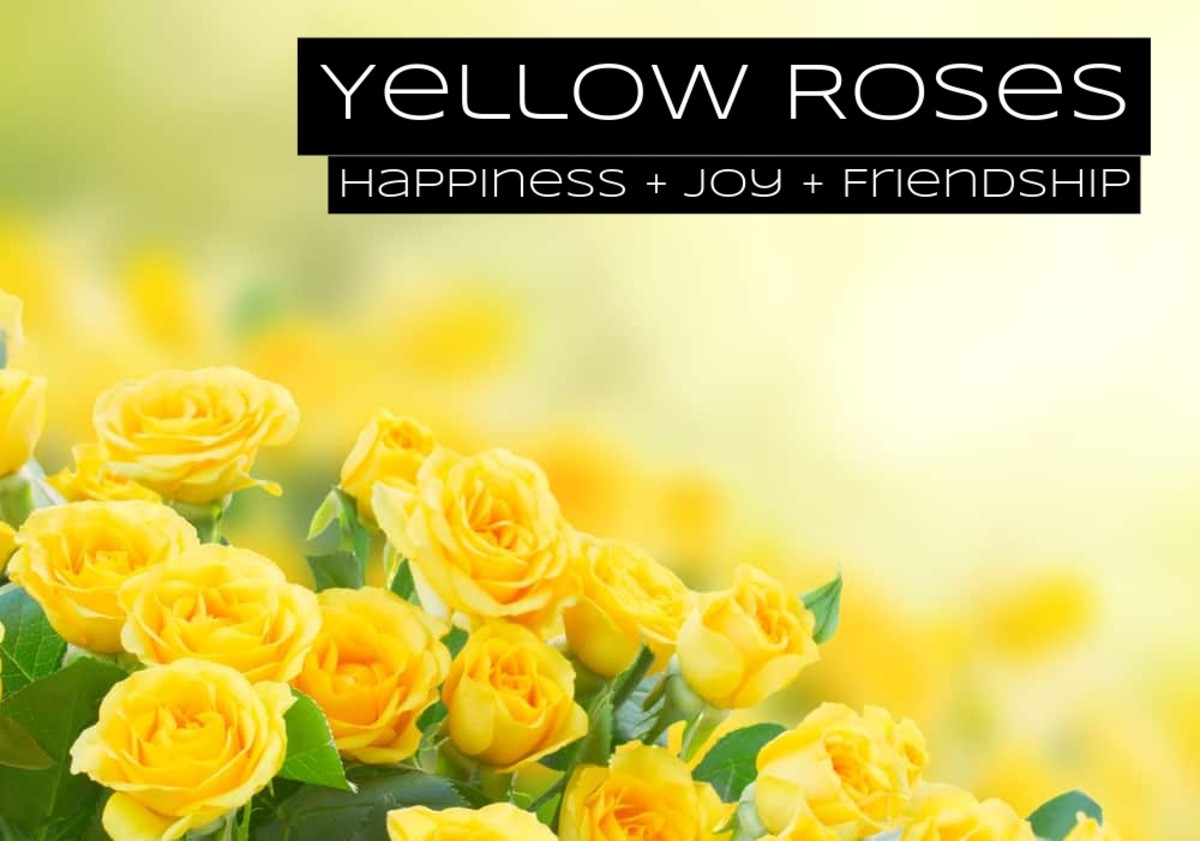 Yellow roses are for friends. Yellow is bright, happy, and joyful.