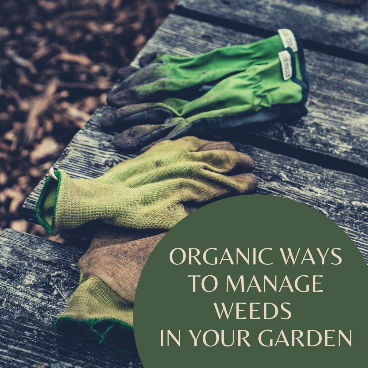 All gardeners at some point will need to decide on a way to control weeds in their garden.