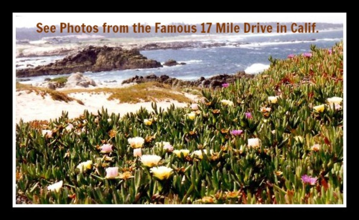 Pictures of Famous 17 Mile Drive in California ~ Pebble Beach and Seacoast