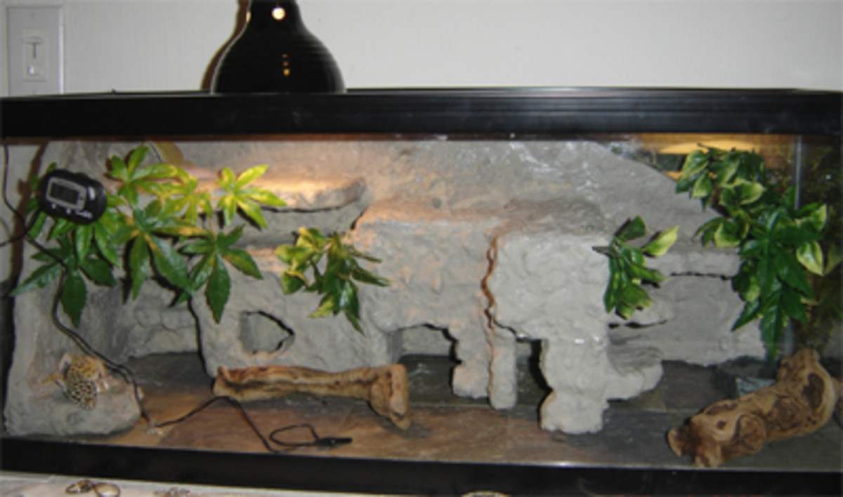 Slate tiles are a Great substrate. Enclosure has a fake rock layout.