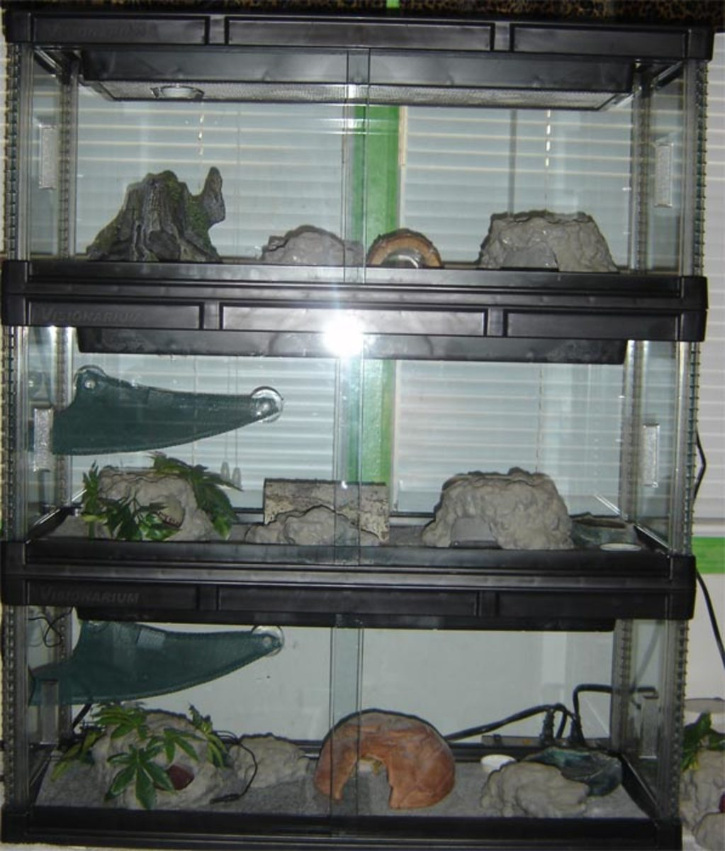 Stackable caging system with carpet substrate. Simple layout with multiple hides and humide hides. Great designs. Examples of fake rock are also seen.