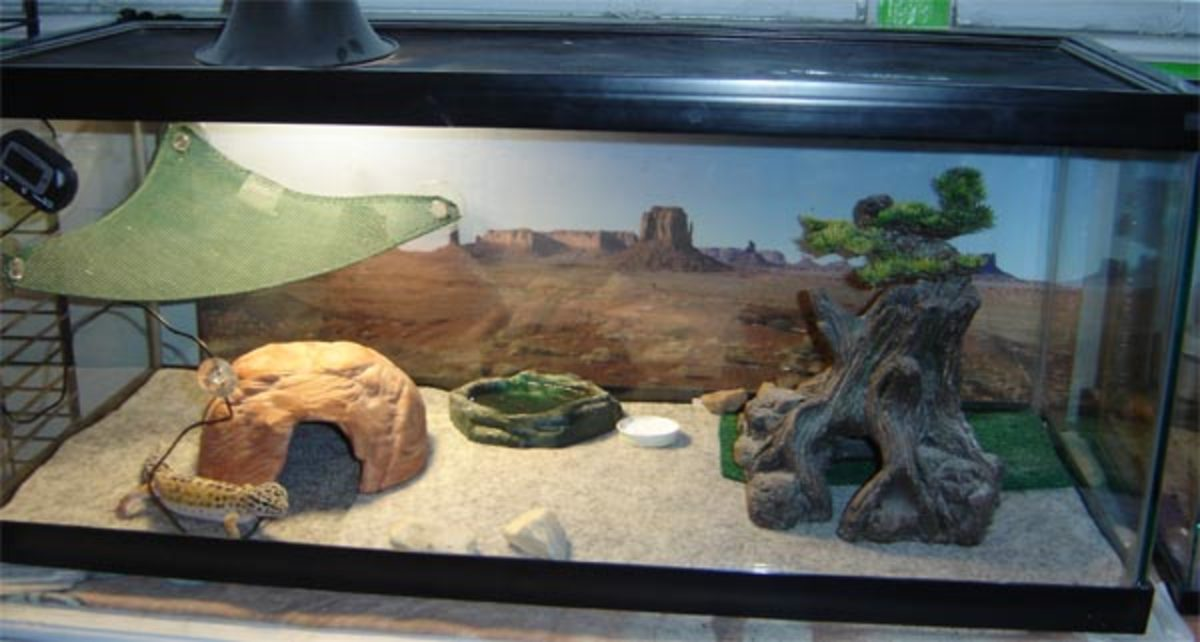 Reptile carpet is another good substrate to use. This is a simple layout. Add a humid hide and it'd be perfect.