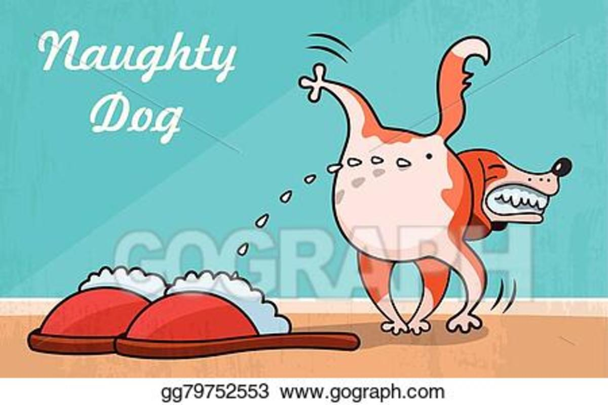dealing-with-common-pet-misbehaviours