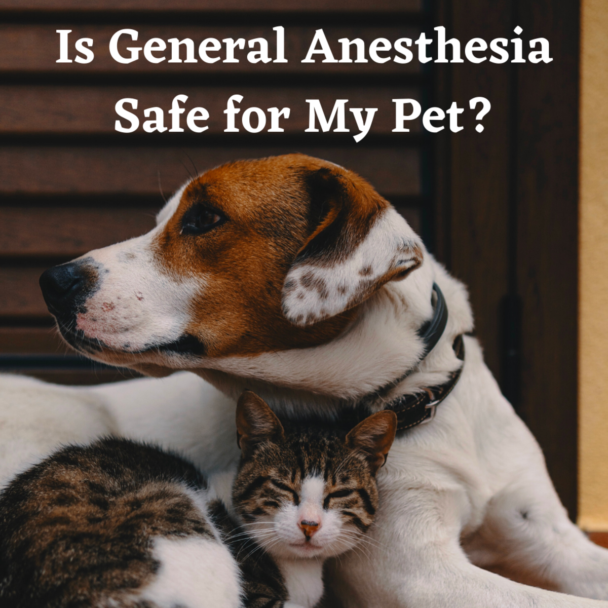 Learn some of the risk factors for animals going under general anesthesia.