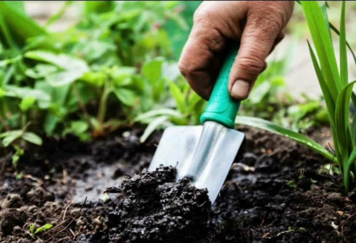 10-things-that-everyone-should-consider-having-before-starting-a-home-garden