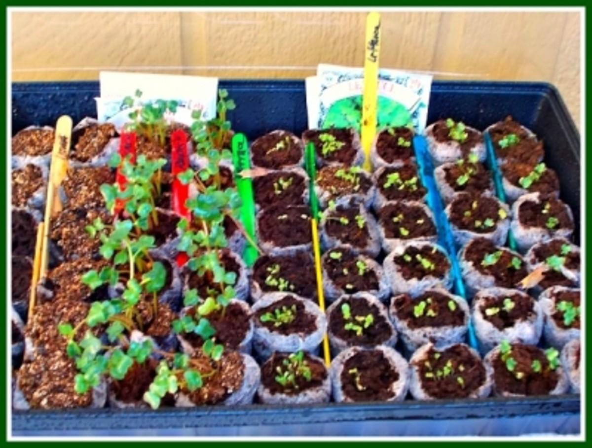 Jiffy Pot Plant Nursery Tray - Week One
