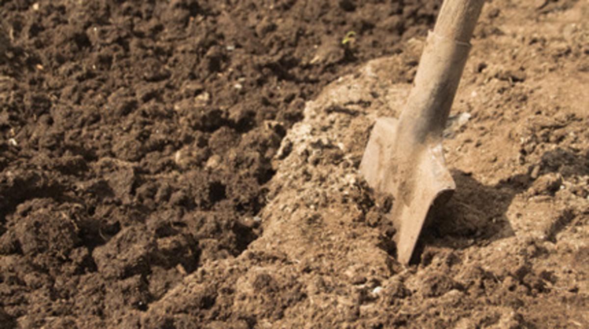 Preparing the soil for gardening