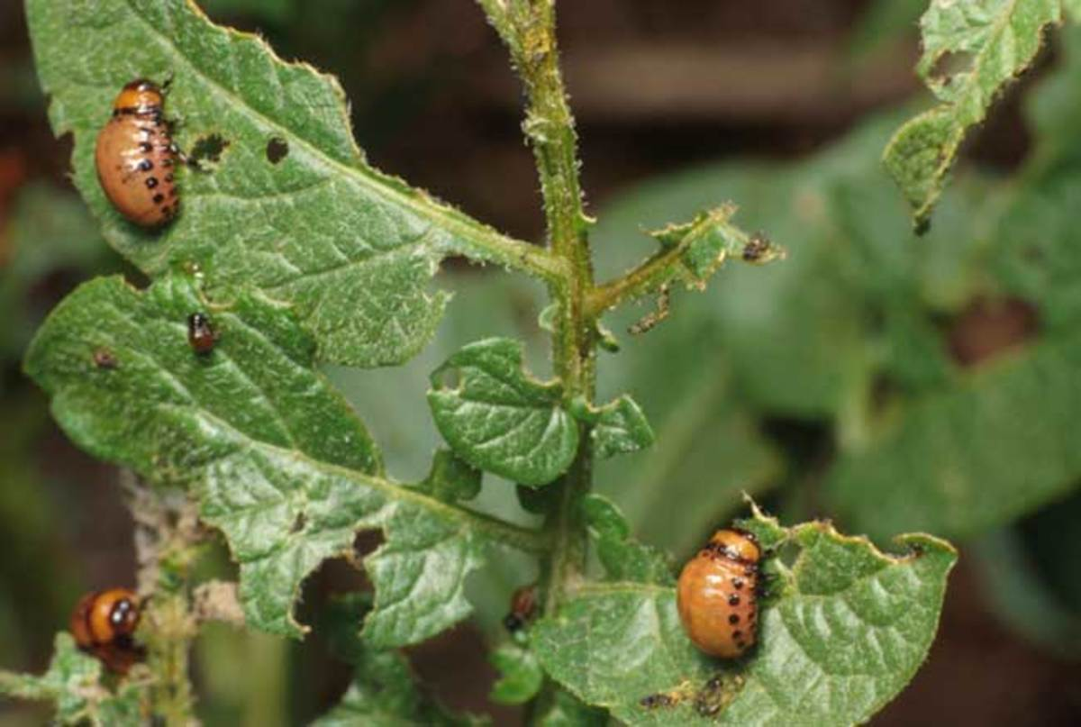 This is what pests can do to your plants