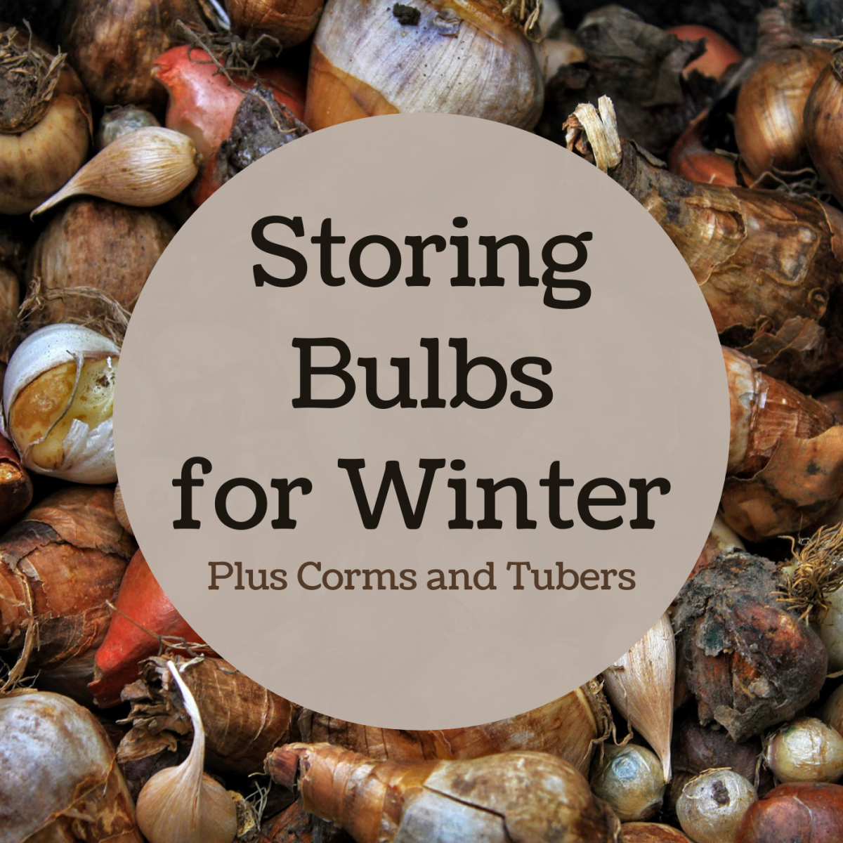 Learn how to store some common geophytes for winter, and get tips for the proper storage conditions for each one.