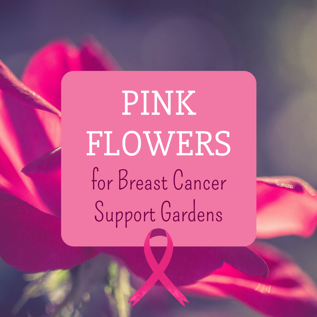 Show your support for Breast Cancer Awareness Month by planting a pink garden that blooms in October!