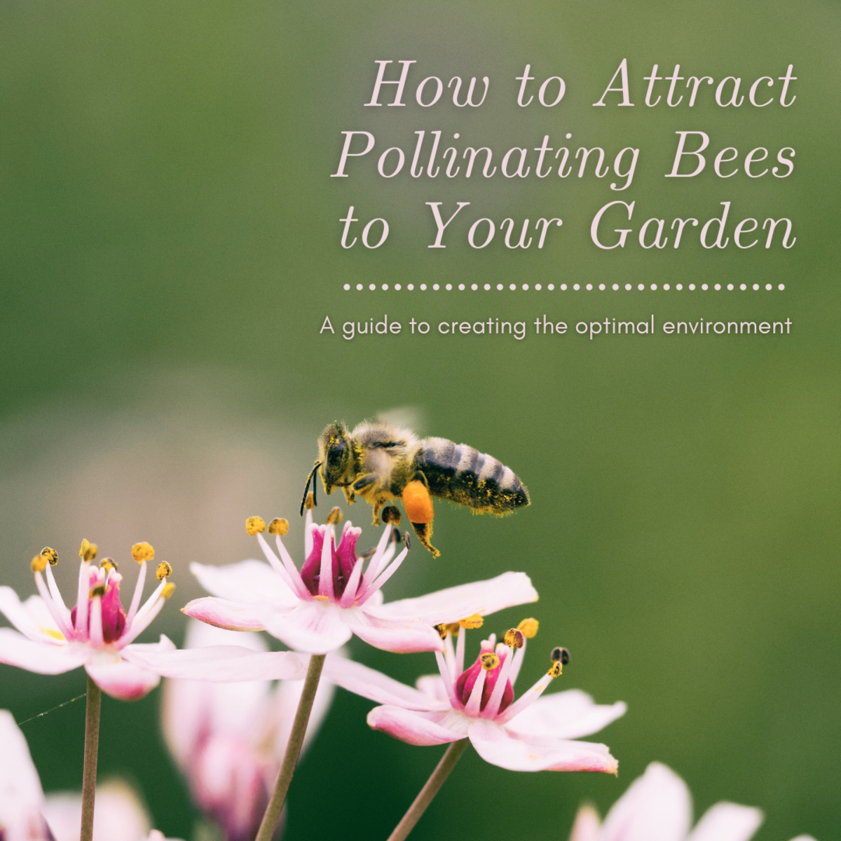 This article will provide you with plenty of information for creating the perfect environment to attract pollinating bees to your garden.