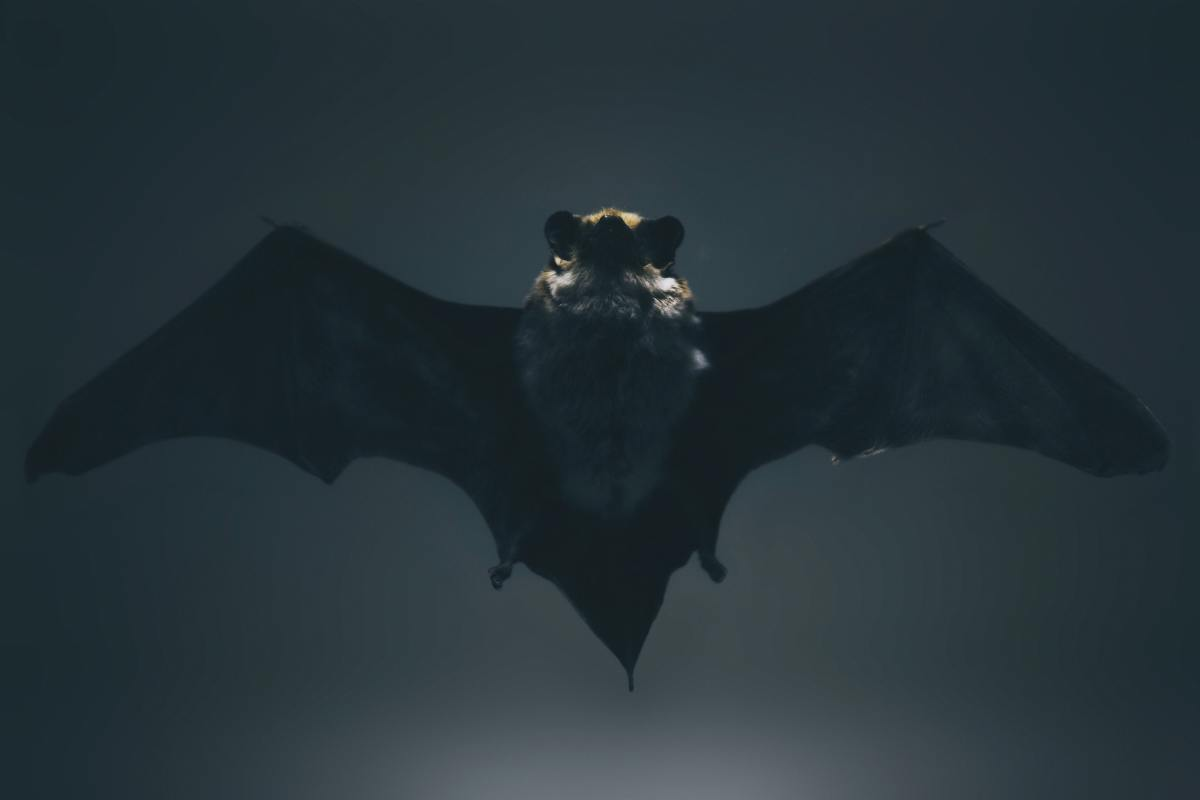 Vampires are often affiliated with nocturnal animals such as bats.
