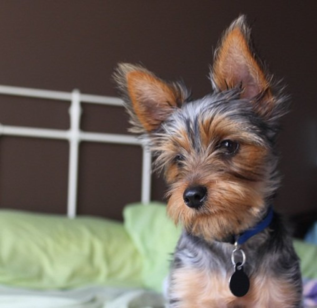 is-it-okay-to-let-your-dogs-sleep-on-your-bed-with-you