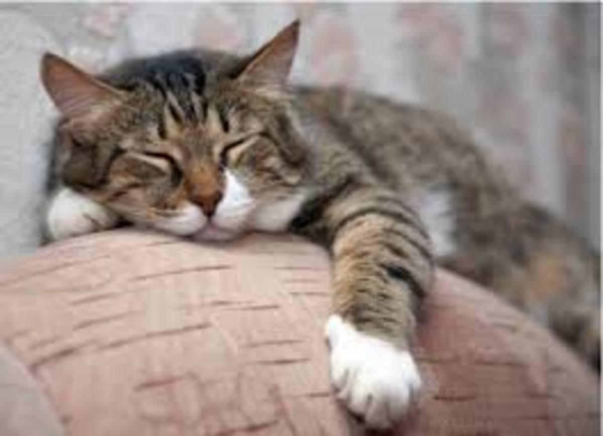 geriatric-cat-problems