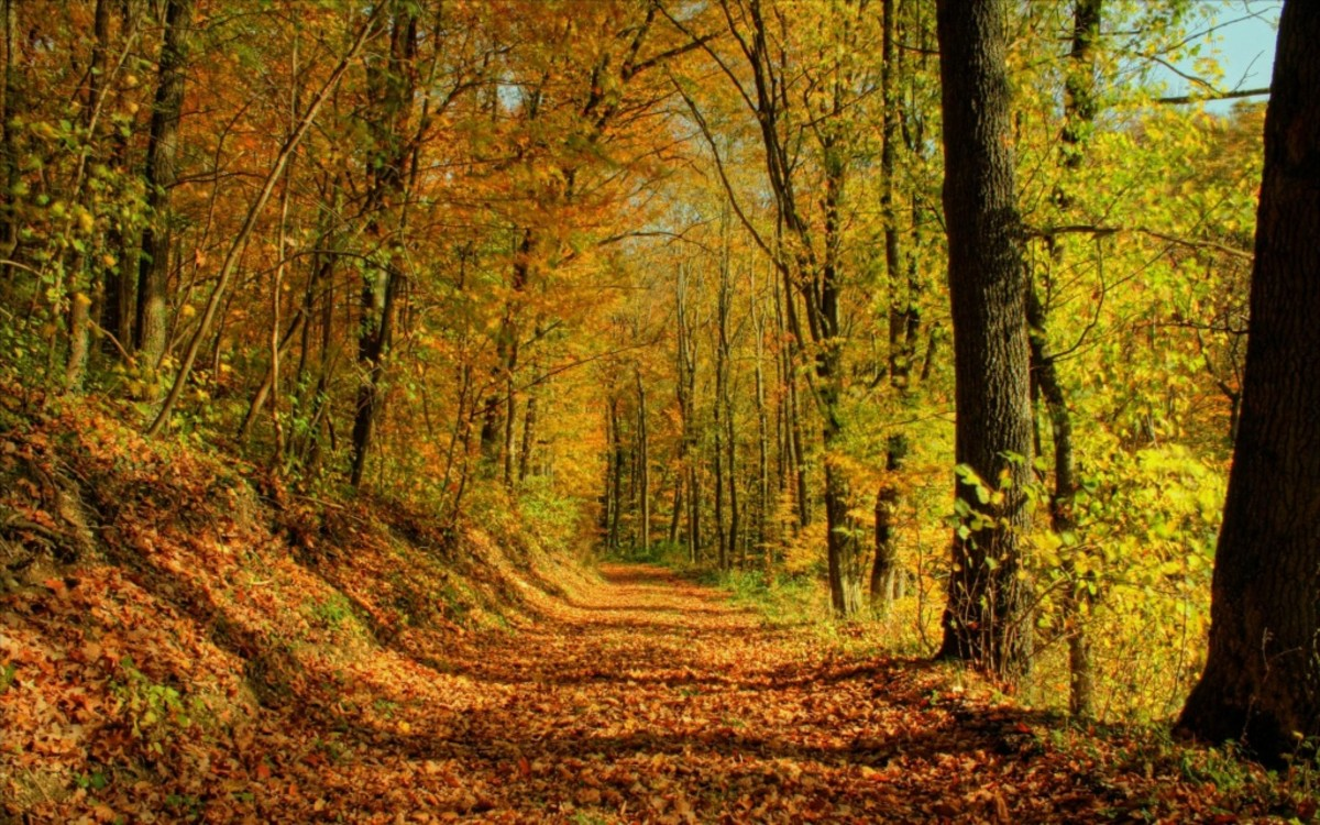 An Autumn Road of My Childhood