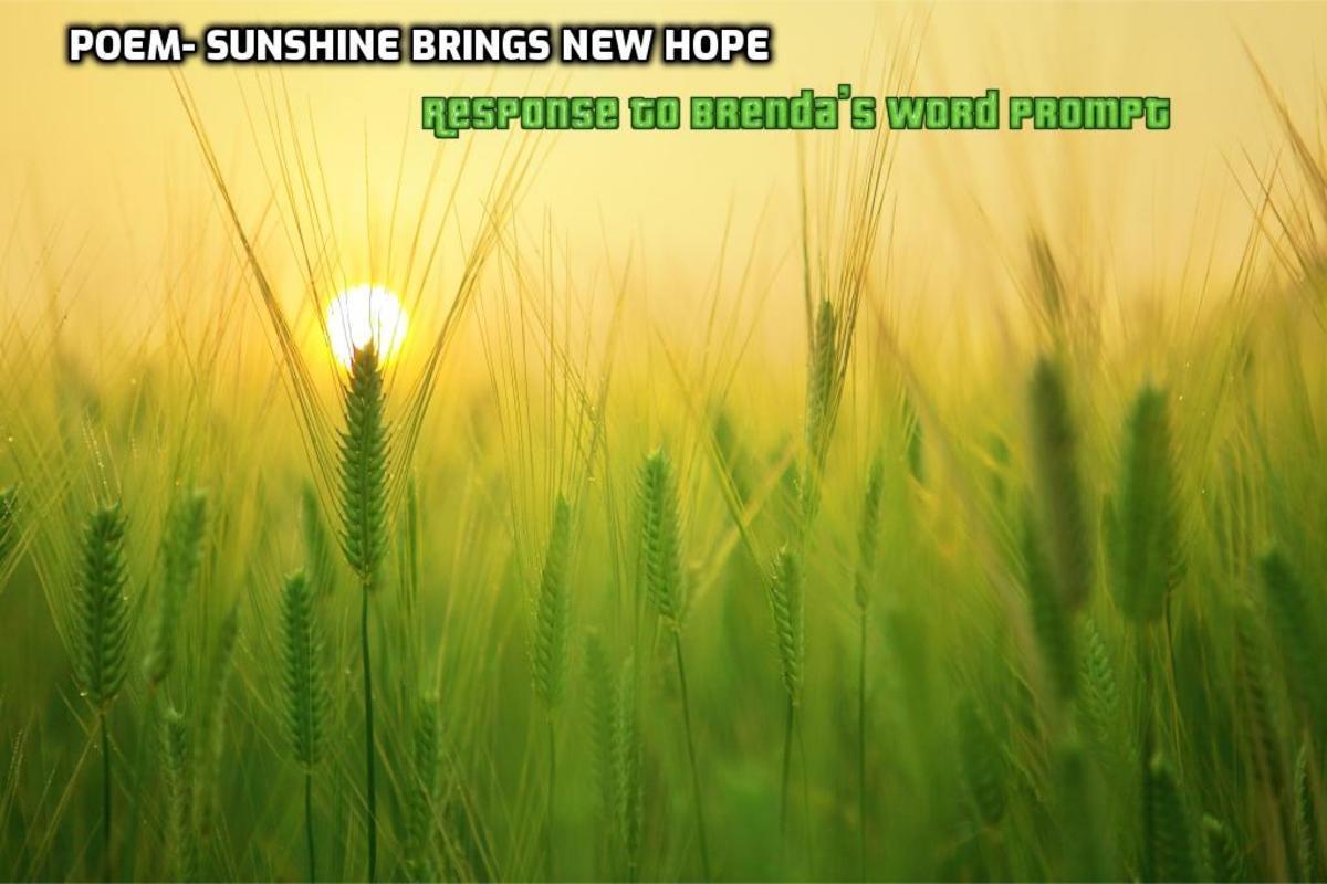 Poem-Sunshine Brings Hope-Response to Brenda's Word Prompt