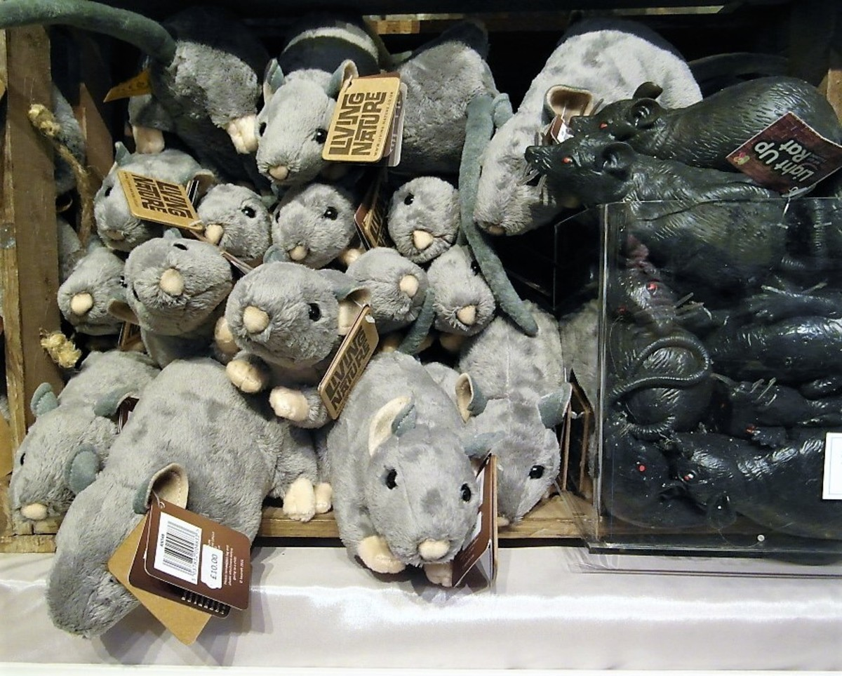 Rats in the museum shop at Eyam.