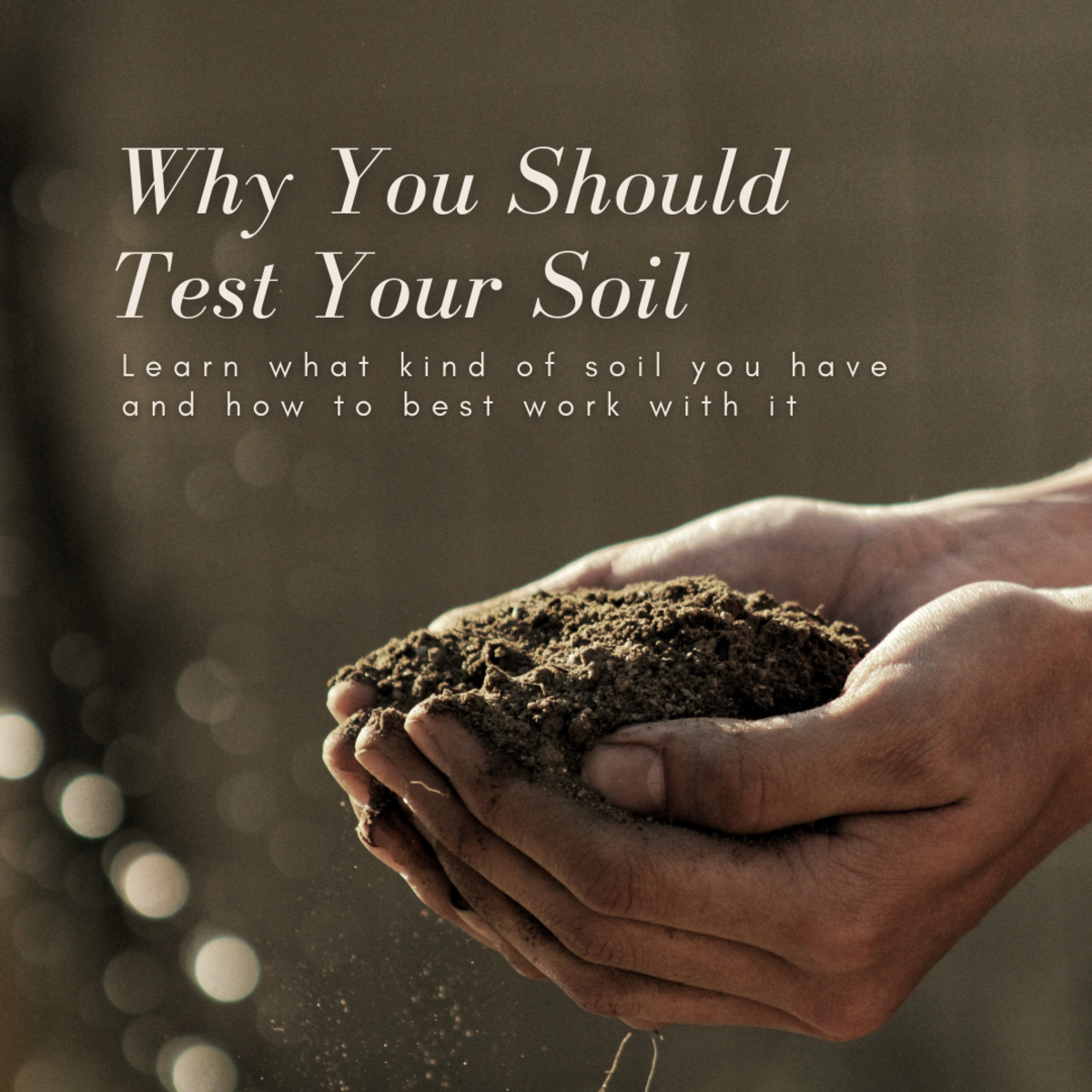 This article will break down why it's important to test your soil and provide information on how to improve its quality.