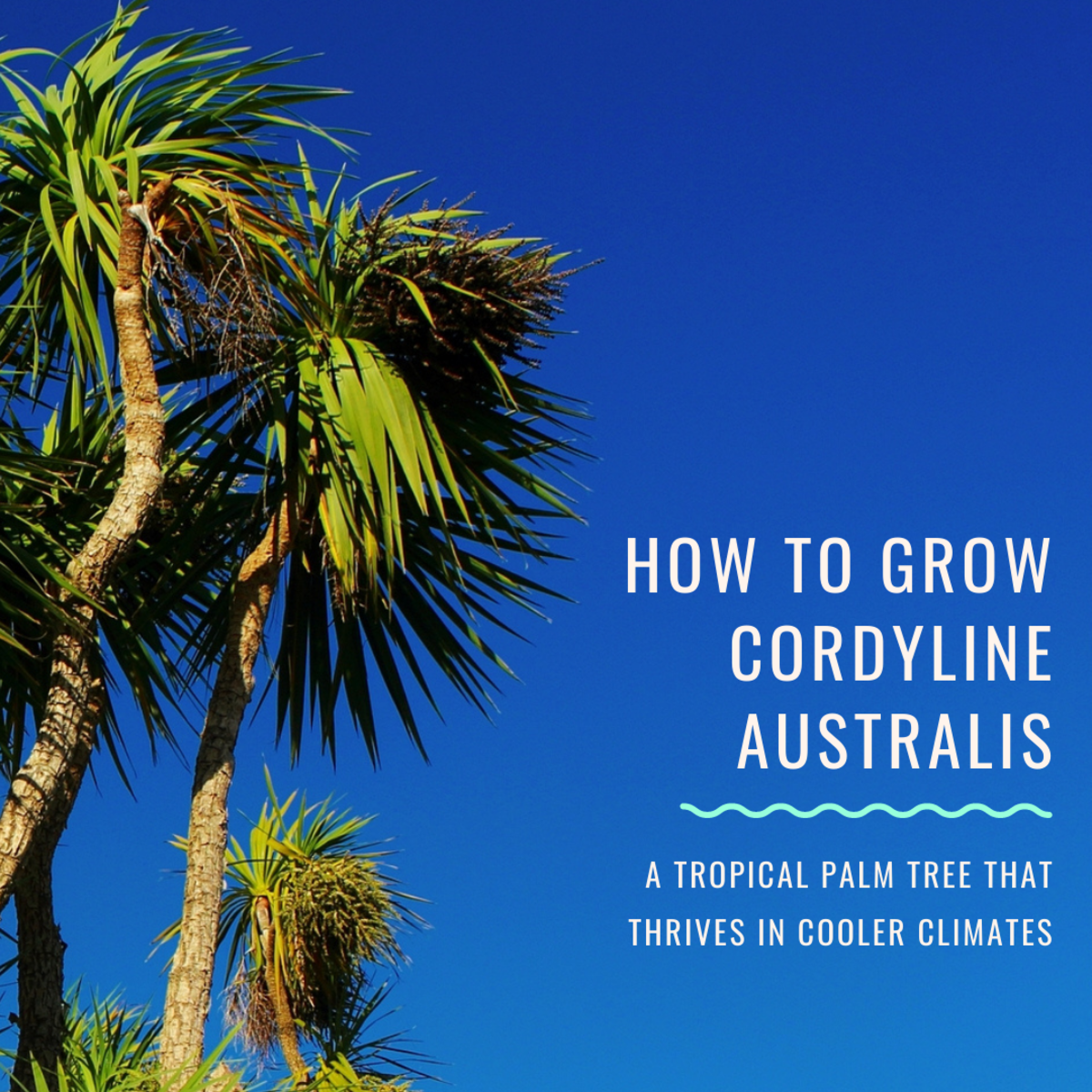 Cordyline Australis: A Tropical Palm Tree for a Cooler Climate