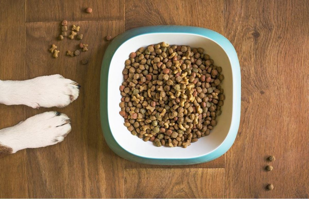 should-you-leave-food-out-for-puppies-and-dogs