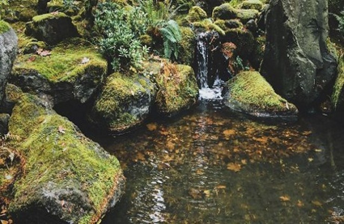 Waterfall with Excess Algae