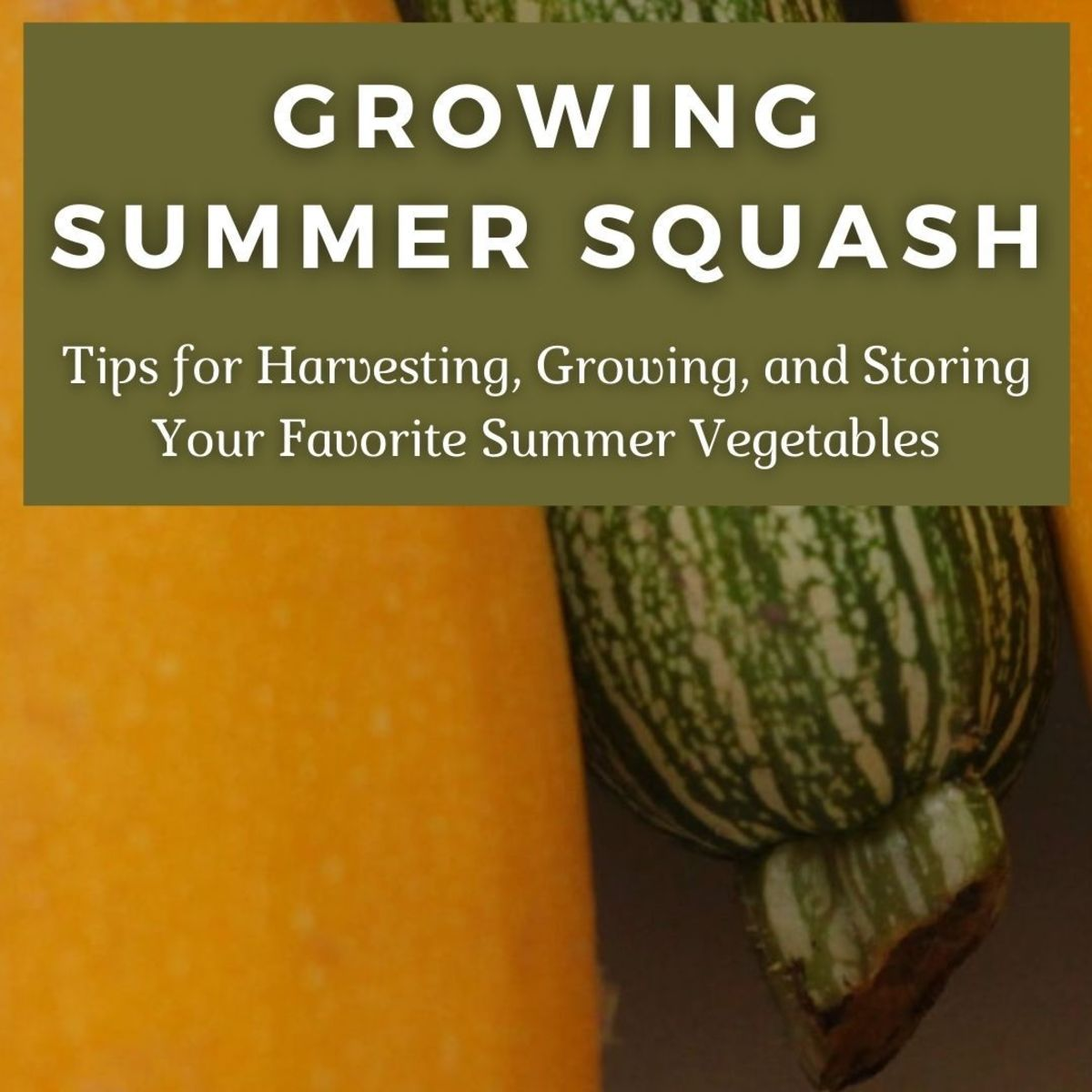 The four major types of summer squash are zucchini, yellow straightneck, yellow crookneck, and scallop.