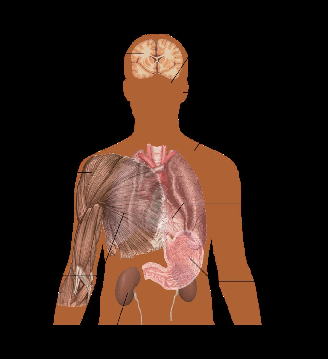 Potential symptoms of a caffeine overdose