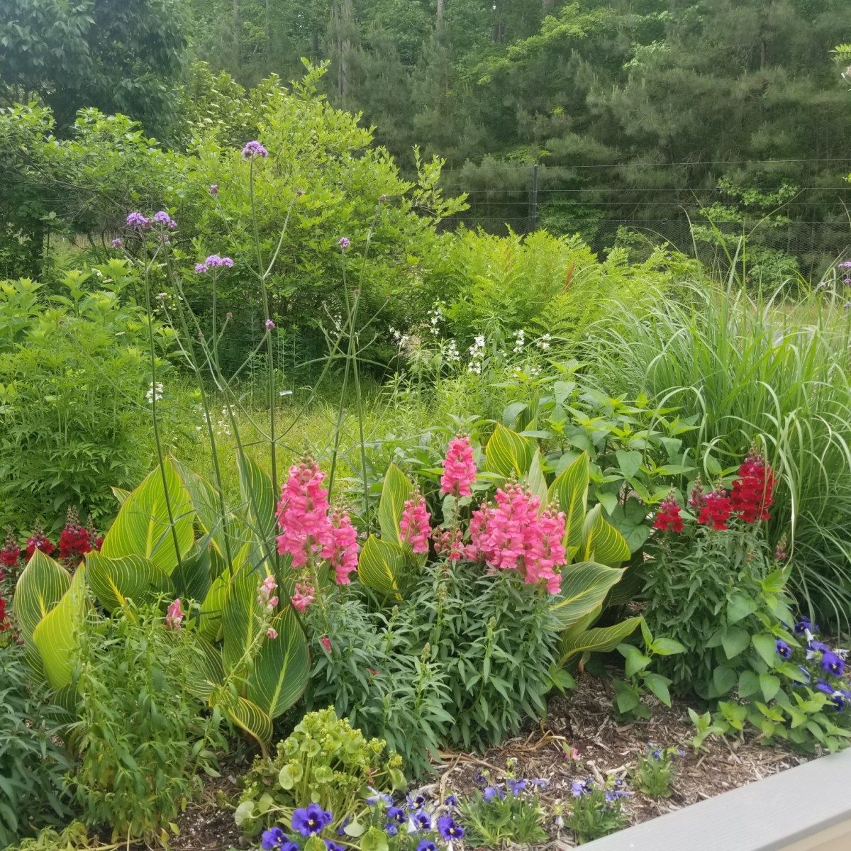 Stop by Freedom Park to see the pretty botanical gardens. It is pet-friendly too.
