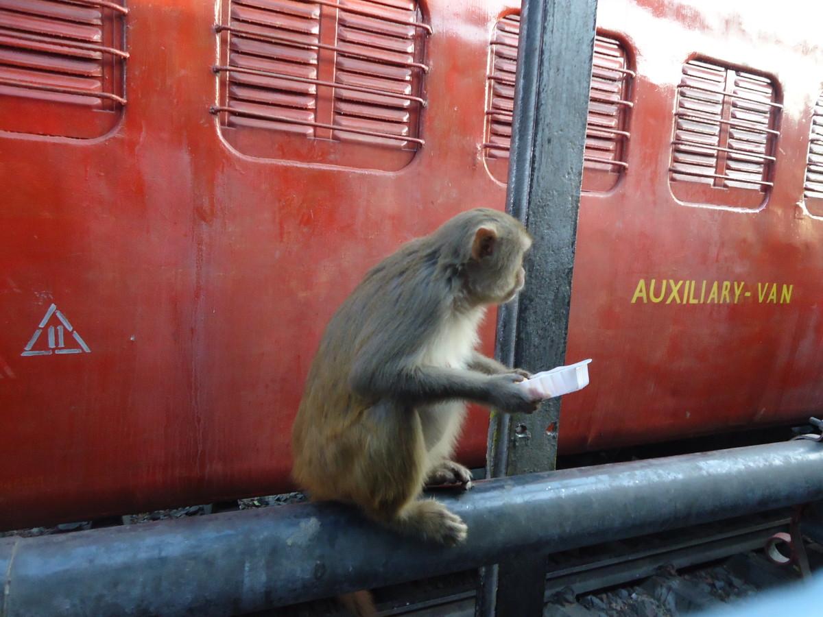 Resident station monkeys