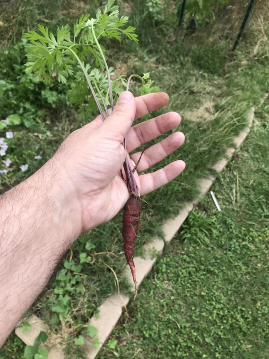 how-to-make-a-fukuoka-style-garden
