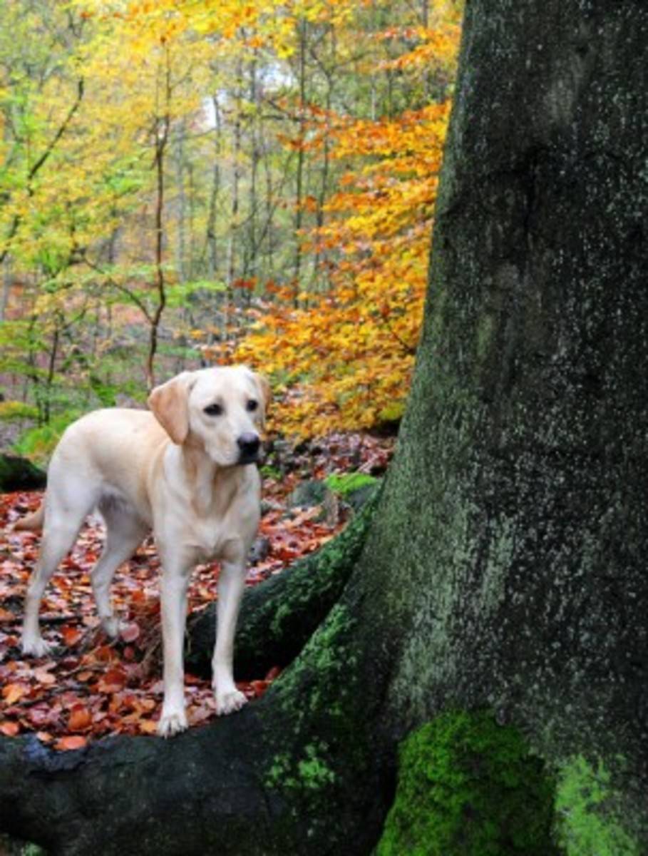When walking in the woods, try your best to keep your dog on the designated path!