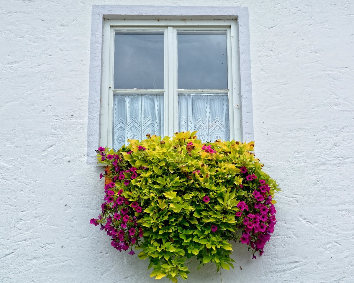 Window Boxes: Adding Beauty to Homes