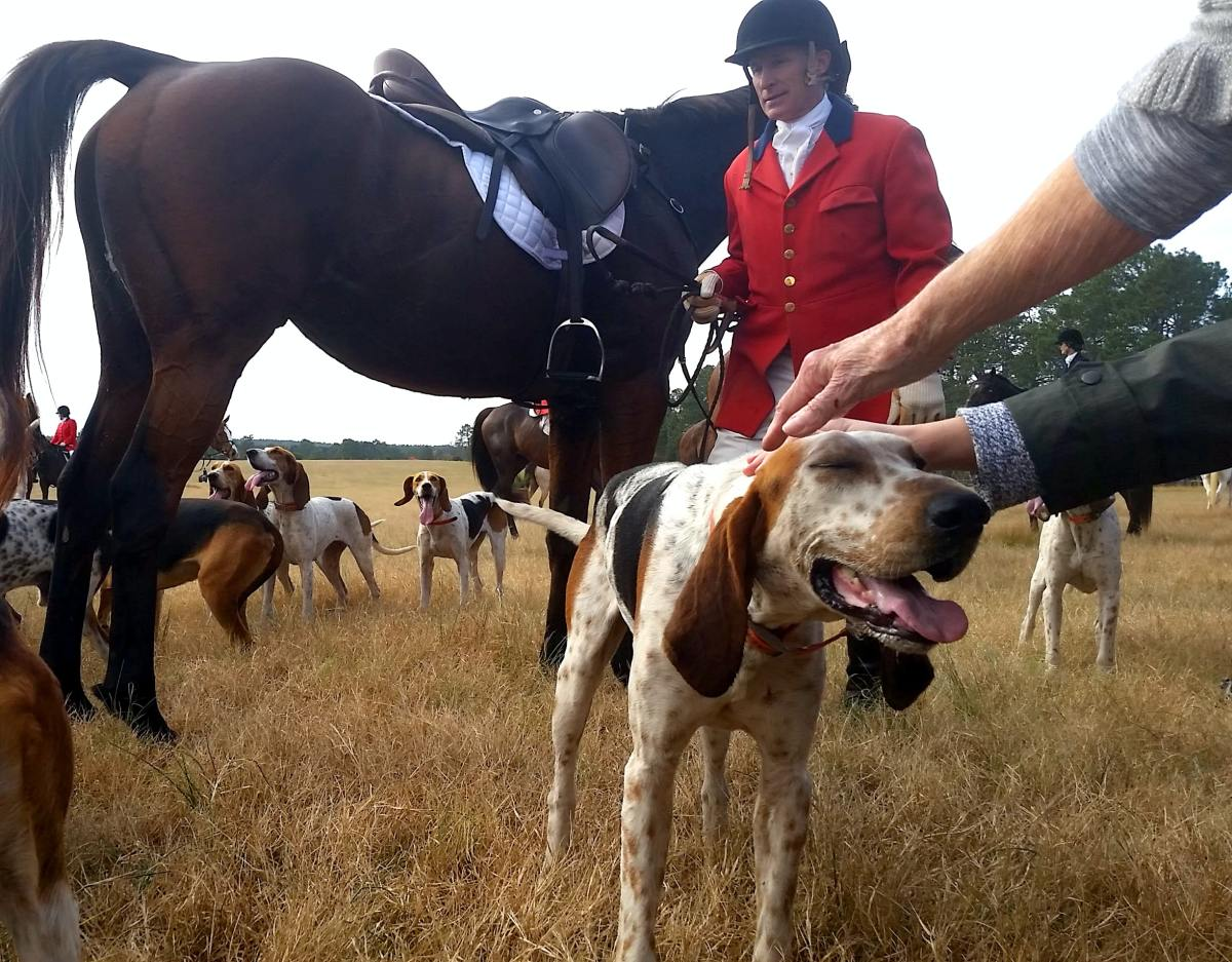 What Is Fox Hunting?