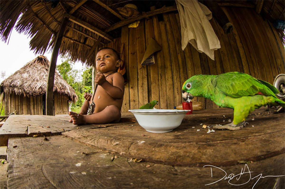 the-riveting-story-of-amazon-explorations-and-their-adverse-impact-on-nature-and-native-populations