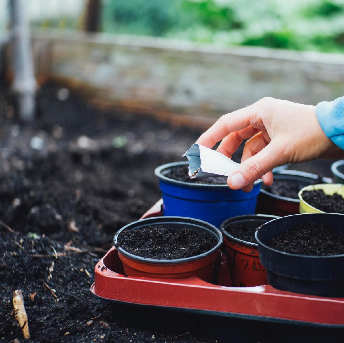 Ensuring that your soil has the essential nutrients and trace minerals it needs will help you grow the most delicious veggies.