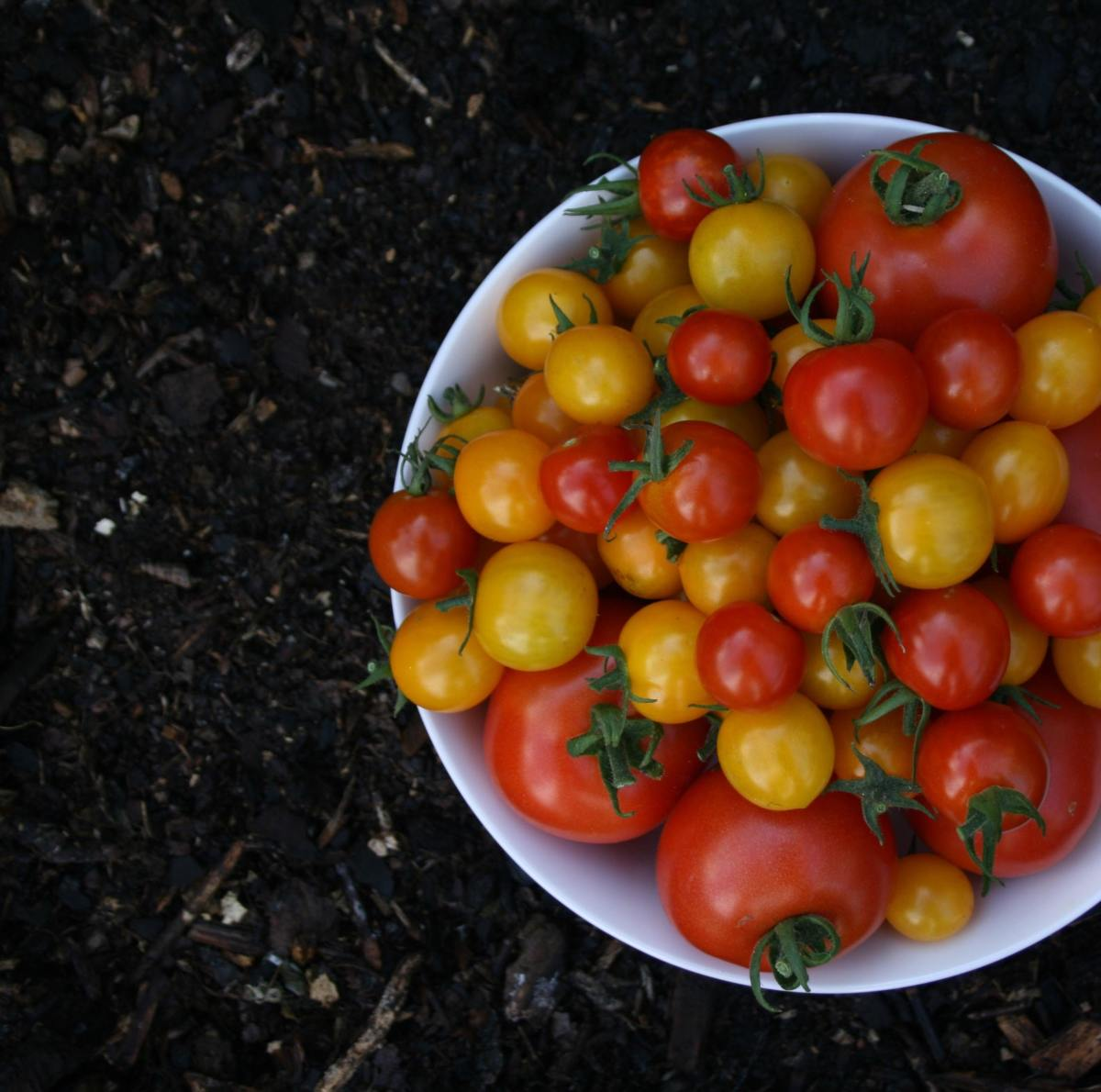 Choosing the right tomato variety for your taste (and zone) makes a huge difference.