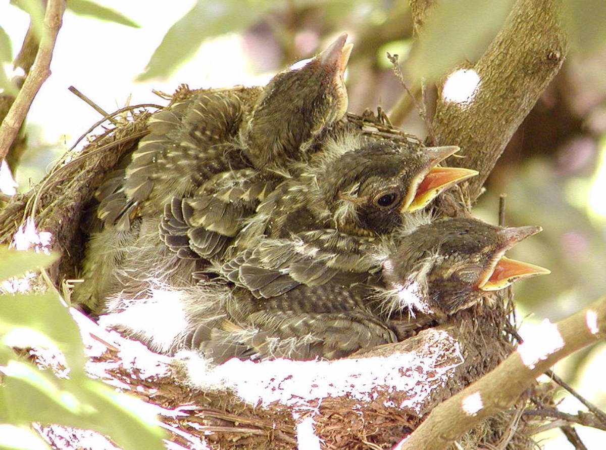 Not the crowded nest they were talking about...