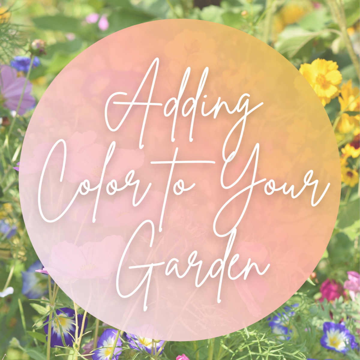 Adding color to your garden