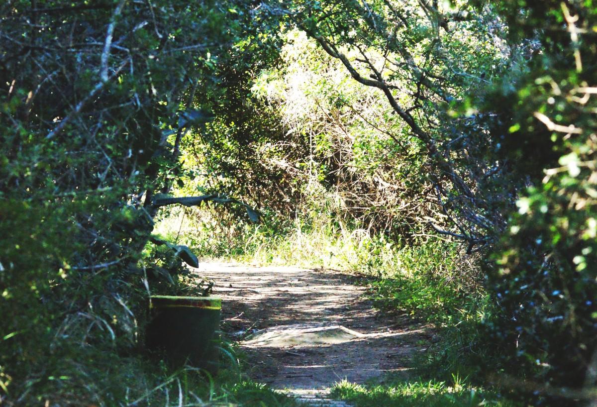 A walk through the coastal forest