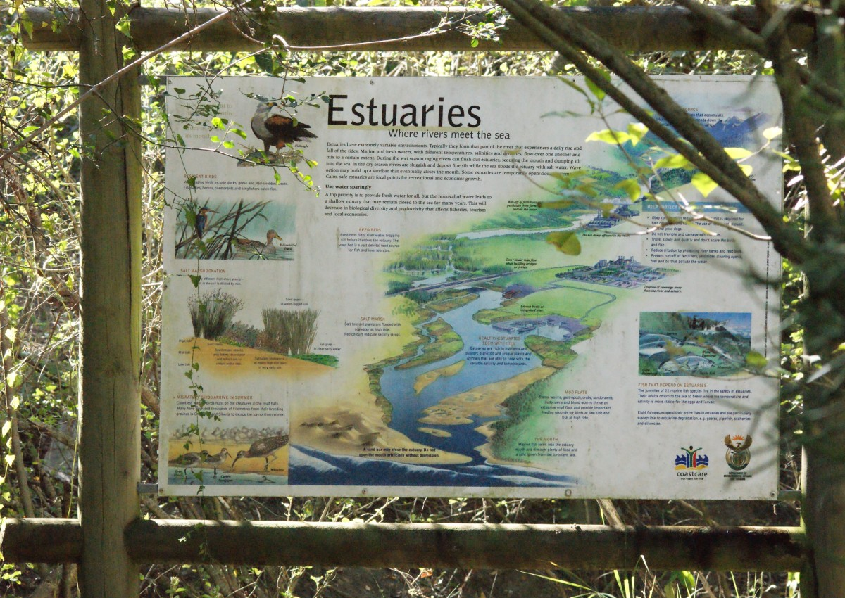nature-on-your-doorstep-nahoon-estuary-nature-reserve-re-visited