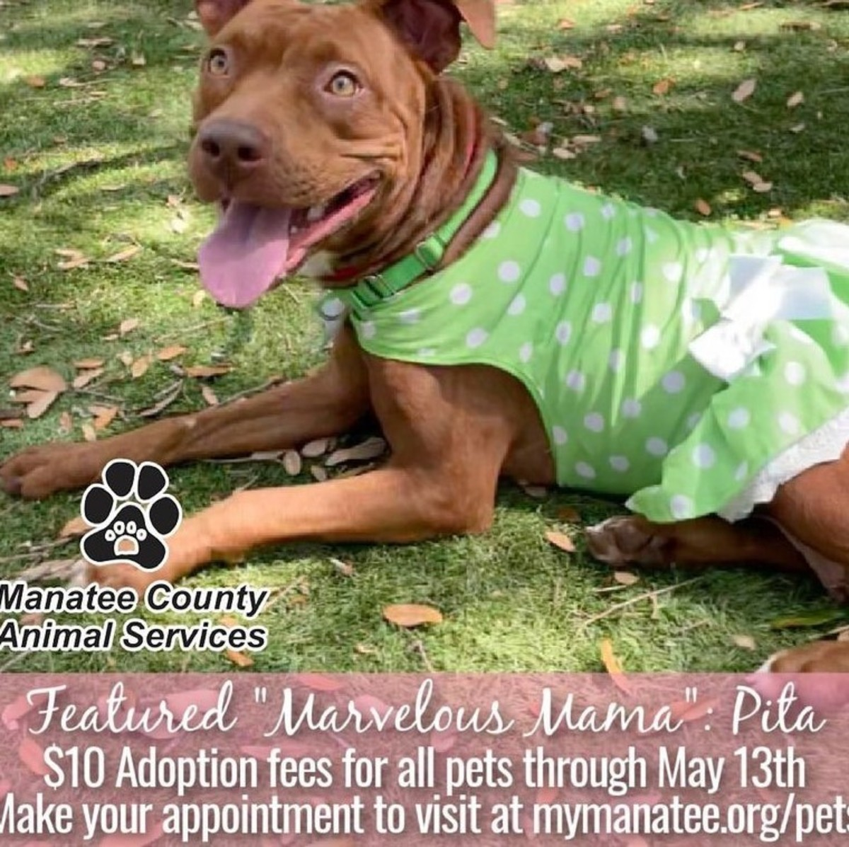 Volunteers and creative photo shoots this month to showcase bully breeds at the shelter.